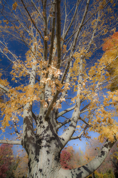 : Fall Images : Bruno Mahlmann Photography